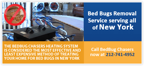 BROOKLYN Bed Bug Dog, BROOKLYN Canine bed bug Inspections, BROOKLYN bed bug exterminator, kill BROOKLYN bed bugs, get rid of BROOKLYN bed bugs, QUEENS Bed Bug Dog, QUEENS Canine bed bug Inspections, QUEENS bed bug exterminator, kill QUEENS bed bugs, get rid of QUEENS bed bugs,
