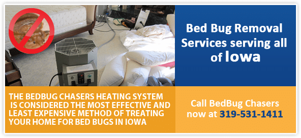 pictures of bed bug, bed bug photo, bed bug egg pictures, bed bug heat treatment iowa
