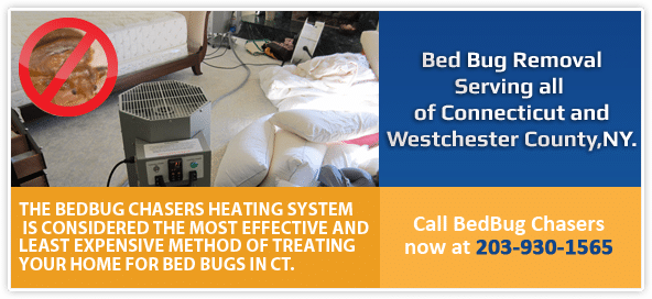 Bed Bug pictures CT, Bed Bug treatment CT, Bed Bug heat CT