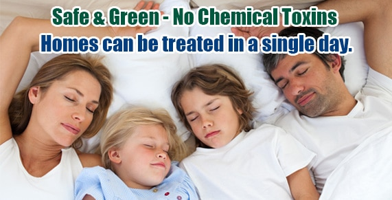 Non-toxic Bed Bug treatment CT, bugs in bed CT, kill Bed Bugs CT
