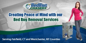 bed bug removal CT. bed bug control CT, bed bug exterminator CT