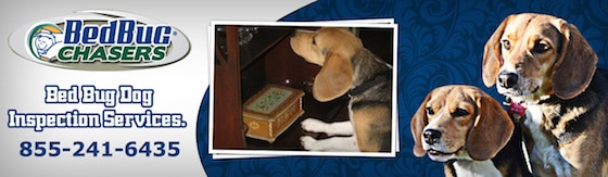 Top #1 Choice for Bed Bug Dog Inspection Sound View, CT, kill bed bugs Sound View CT