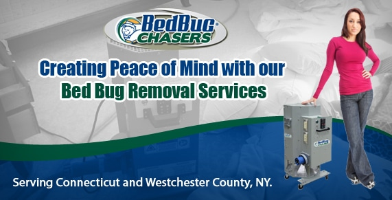 How to Get Rid of Bed Bugs CT, Bed Bug pictures CT, Bed Bug treatment CT, Bed Bug heat CT