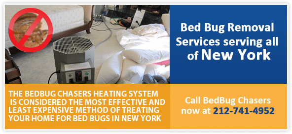 Cool image about Bed Bugs in Manhattan NY - it is cool