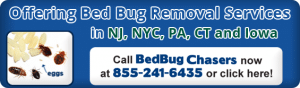 bed bug removal and bed bug insurance NJ,NY,NYC,IA,CT,FL