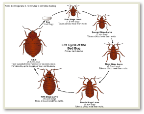 Get Rid of Bed Bugs NJ NYC CT IA PA in Just ONE DAY with NO