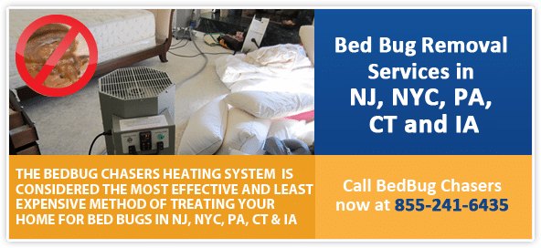 #1 Bed Bug Heat Treatment Services by BedBug Chasers