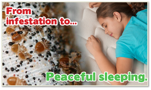 safe bed bug heat, bed bug control, bed bug heat treatment, bed bug bites, Kill bed bugs NJ, Kill bed bugs NY, Kill bed bugs CT, Kill bed bugs PA, Kill bed bugs IA, Kill bed bugs NYC,