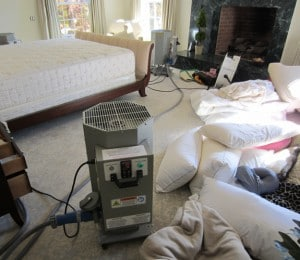 Bed Bug Treatment in Bedroom
