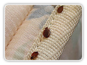 Permanent Solution For Bed Bugs