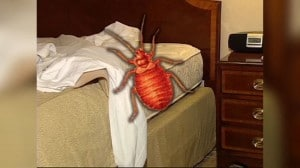 bed bugs in lynchburg virginia